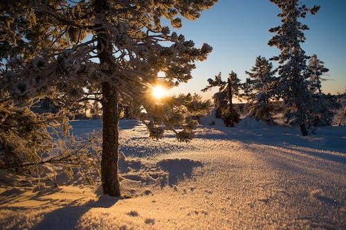 Безкоштовне стокове фото на тему «дерева, Захід сонця, зимовий пейзаж»