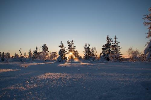Безкоштовне стокове фото на тему «дерева, застуда, Захід сонця»