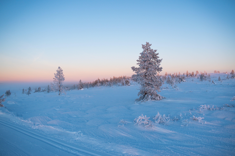 Gratis stockfoto met besneeuwd, bomen, jaargetij, kou