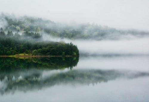 Foto profissional grátis de água, águas calmas, águas tranquilas, árvores