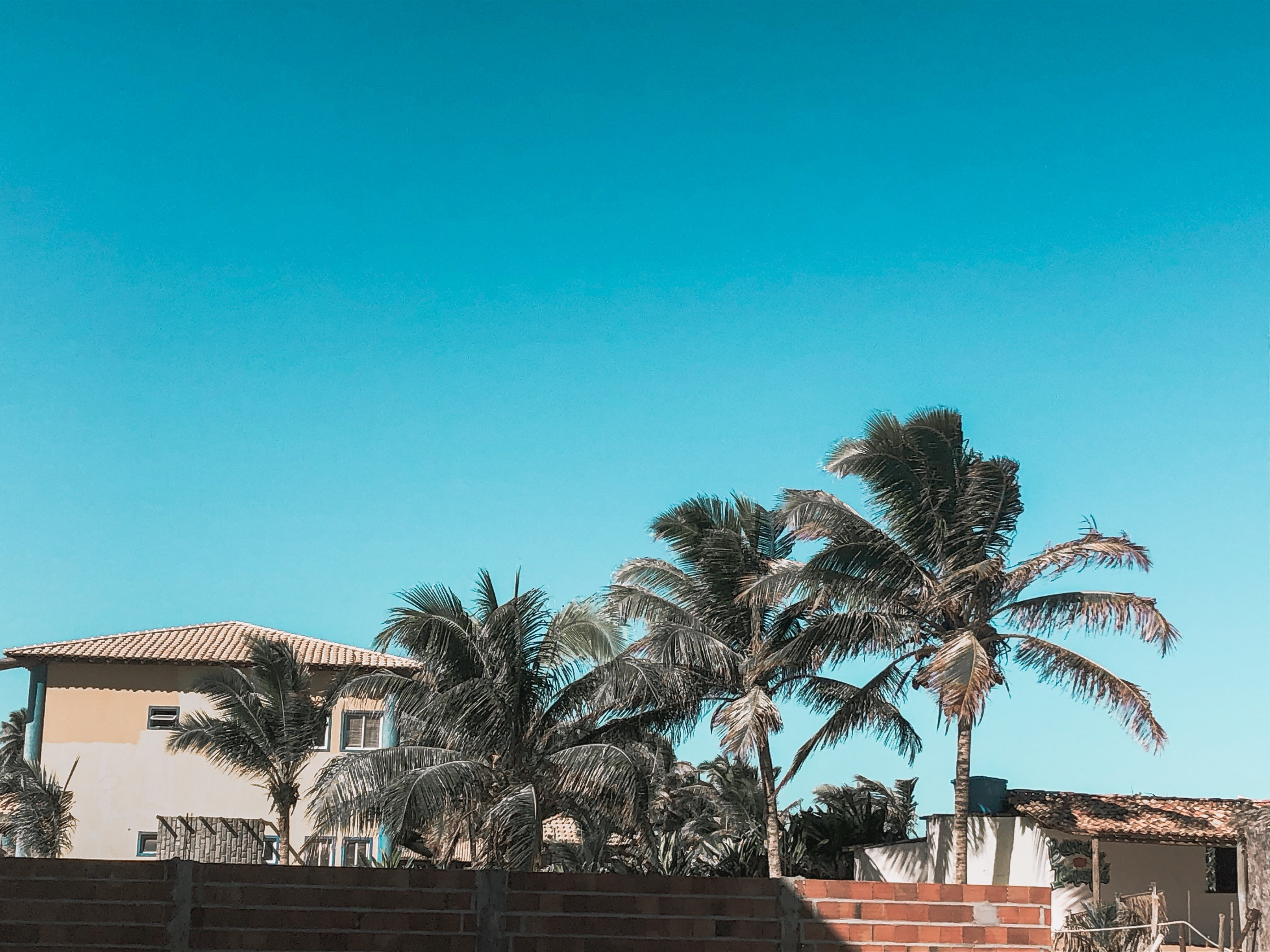 Photo of Palm Trees Near Houses Under Blue Sky