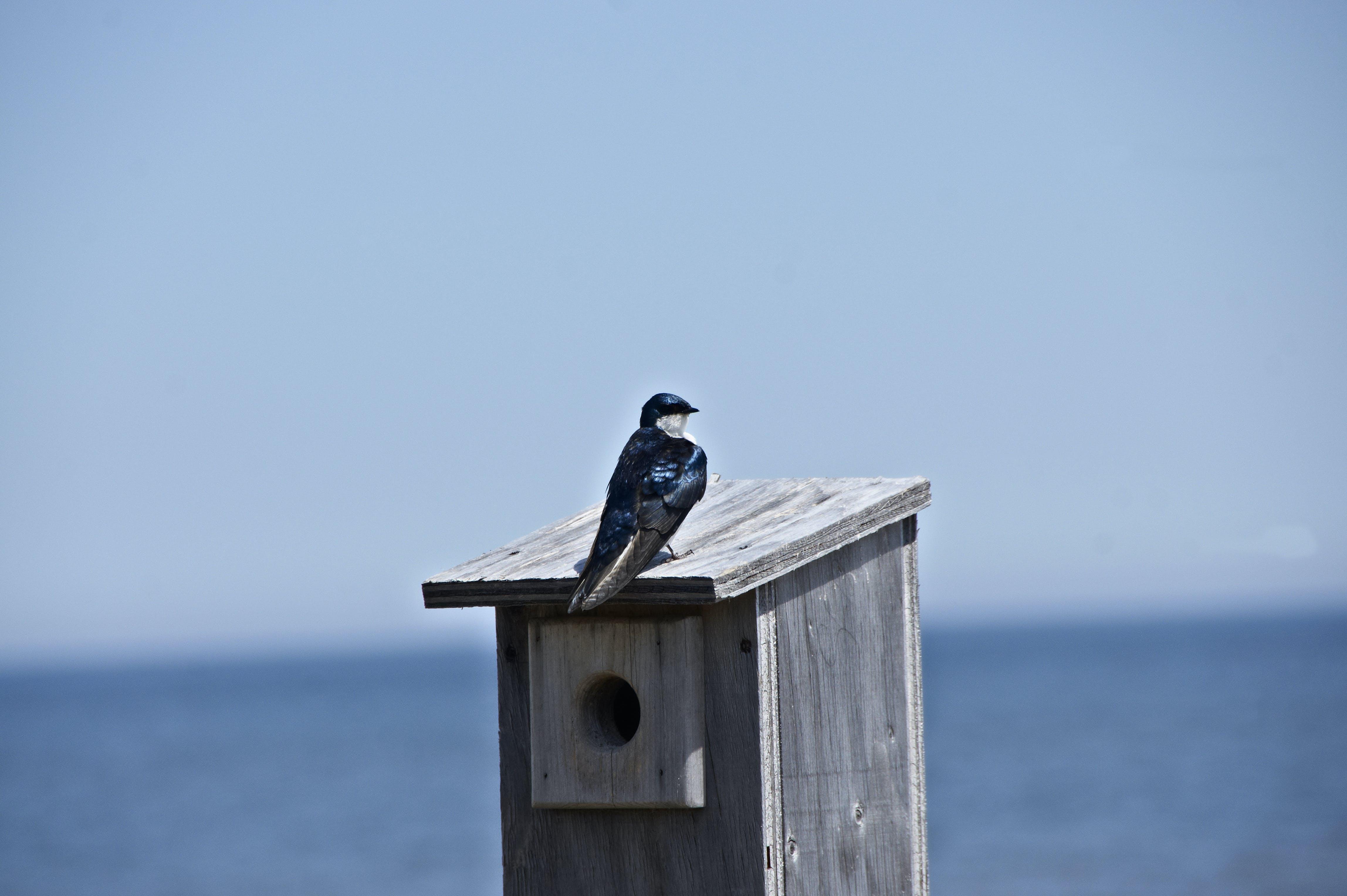 Free stock photo of bird, bird feeder, bird house, blue bird