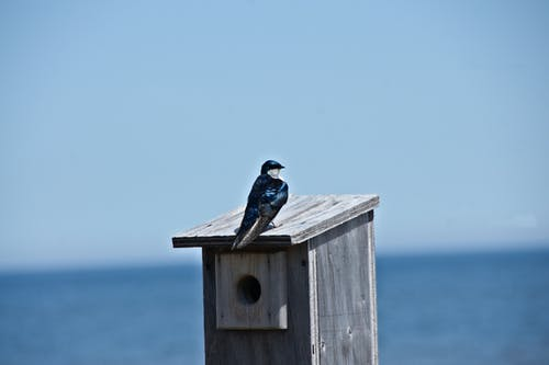 Free stock photo of bird feeder, bird house, blue bird