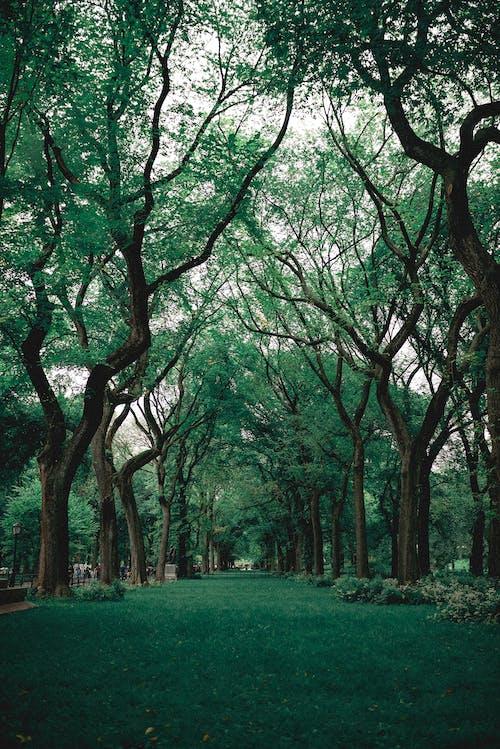 Zielona Trawa W Pobliżu Drzew