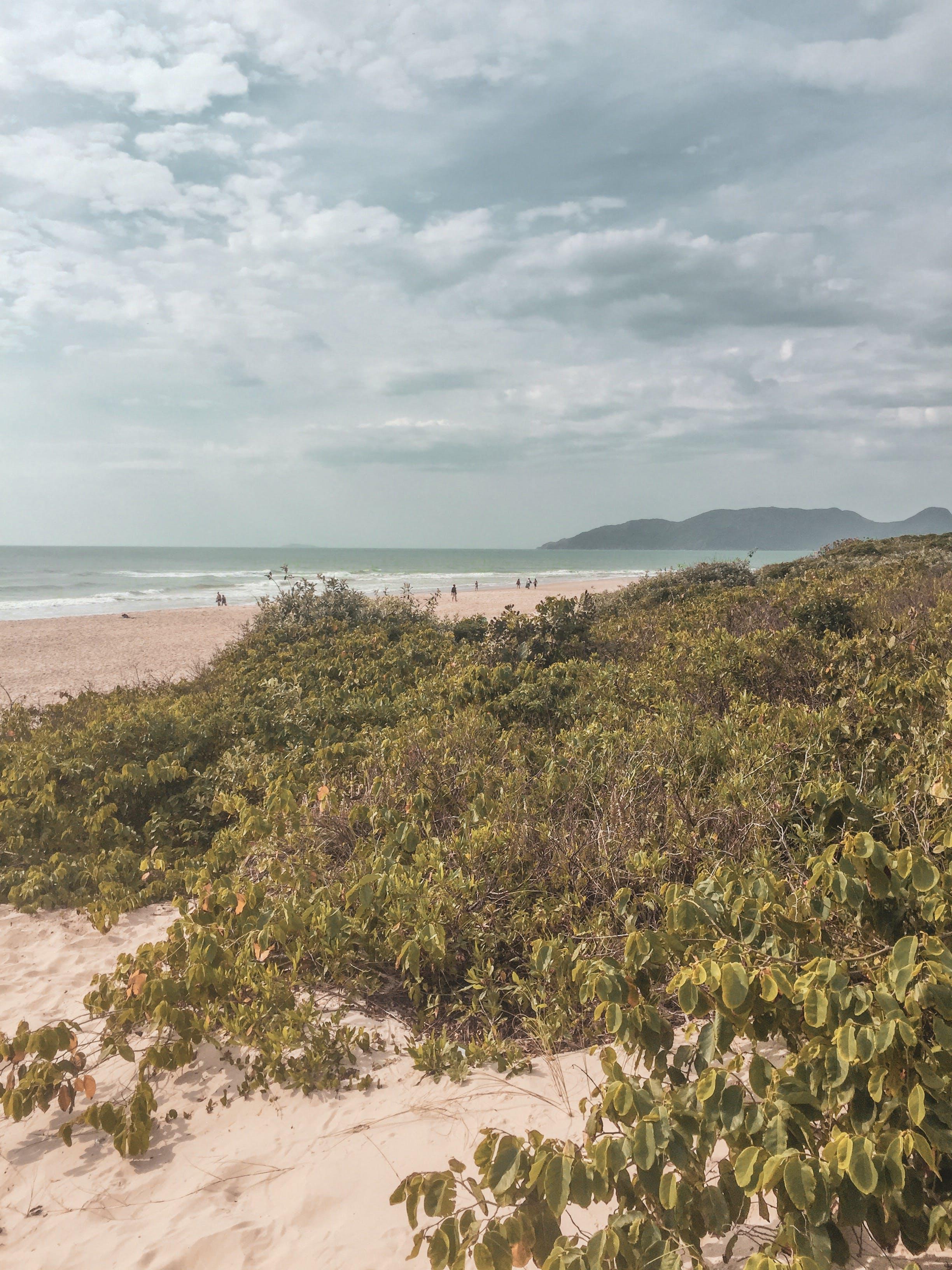 Free stock photo of beach, salt, sand