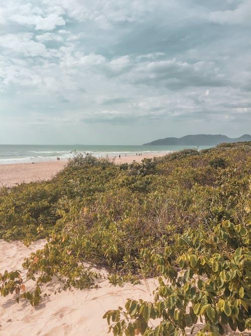 Základová fotografie zdarma na téma písek, pláž, sůl