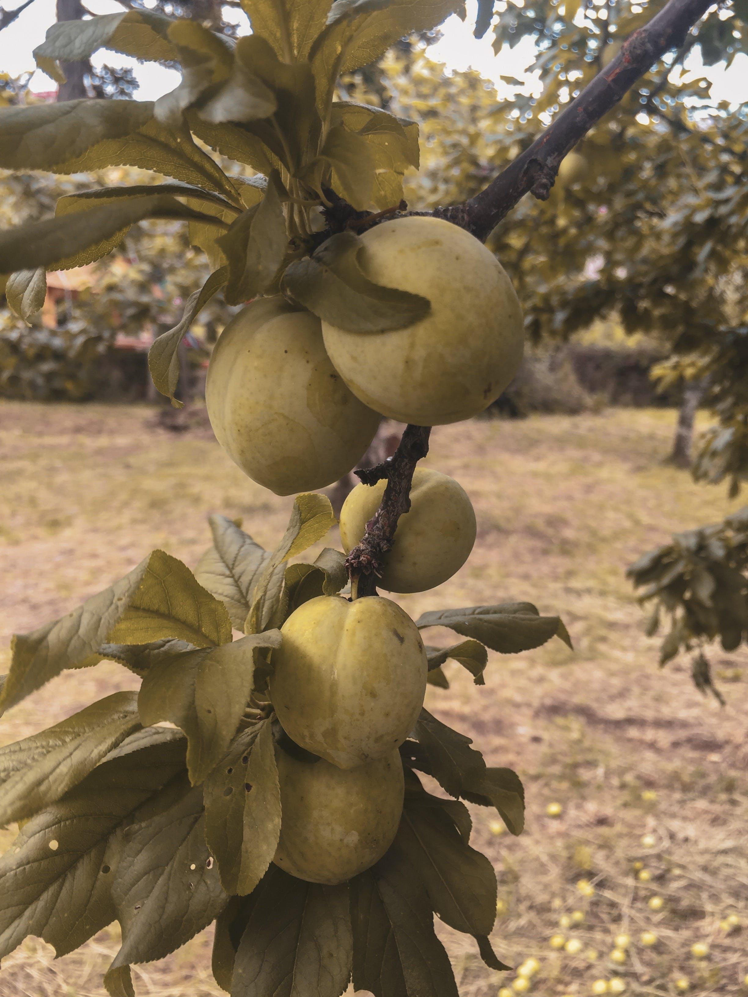 Free stock photo of fruit