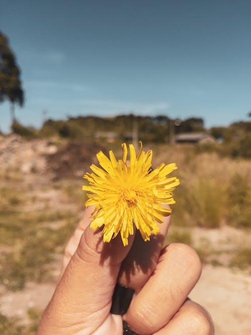 Základová fotografie zdarma na téma kytka