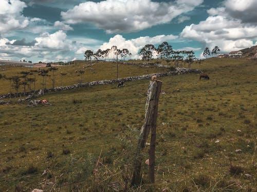 Základová fotografie zdarma na téma hřiště, kráva