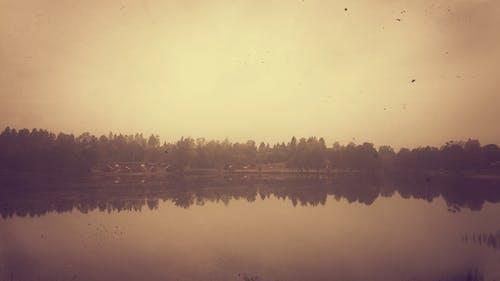 Free stock photo of nature, reflex