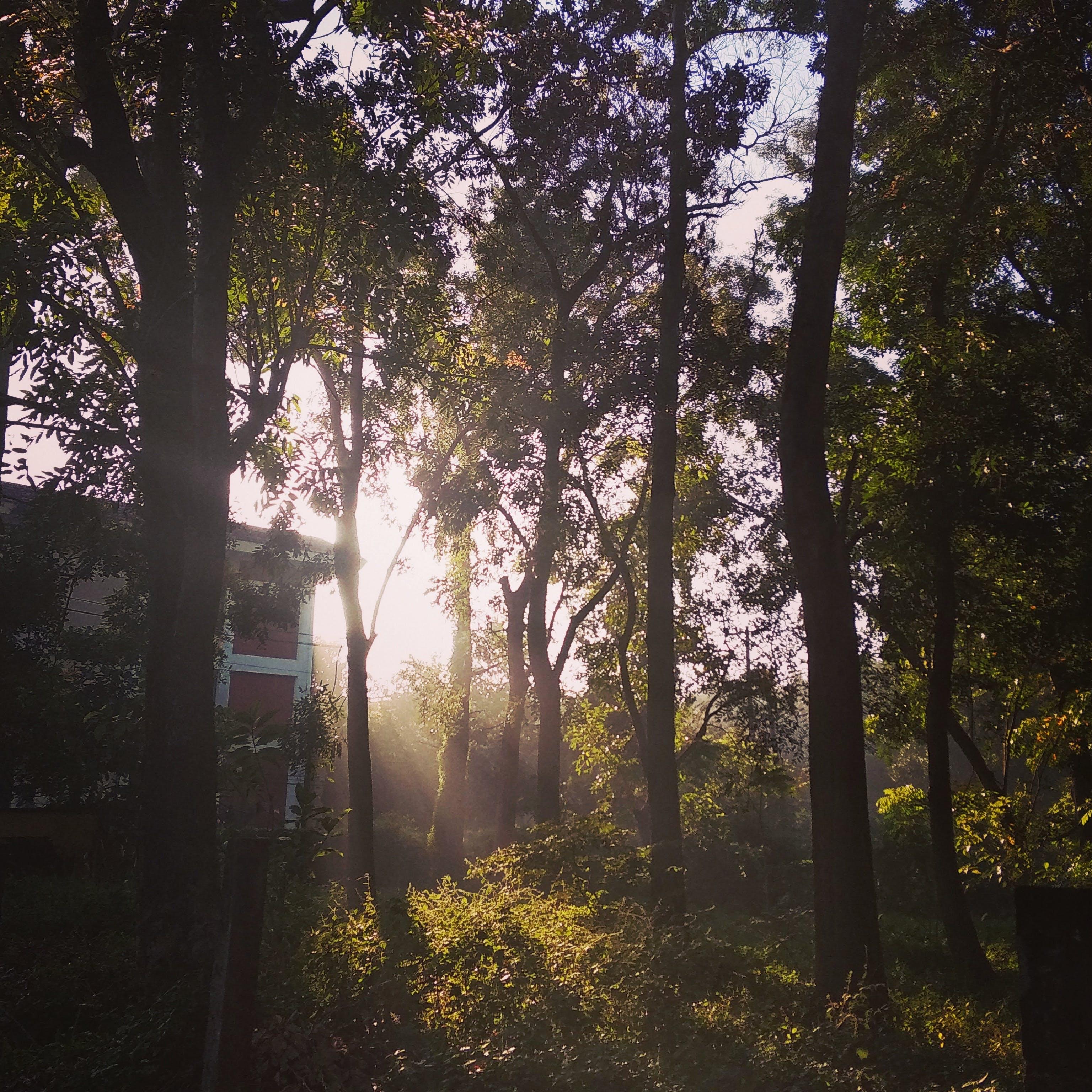 Free stock photo of cây, nhà ở, NongLam, rừng ở trường