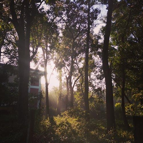 Immagine gratuita di cây, nhà ở, nonglam, rừng ở trường