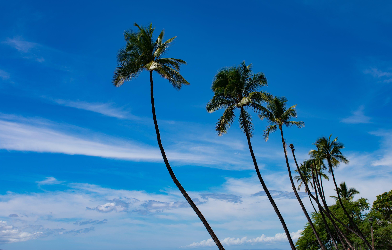 ağaçlar, gökyüzü, Hindistan cevizi ağaçları, Palmiye ağaçları içeren Ücretsiz stok fotoğraf