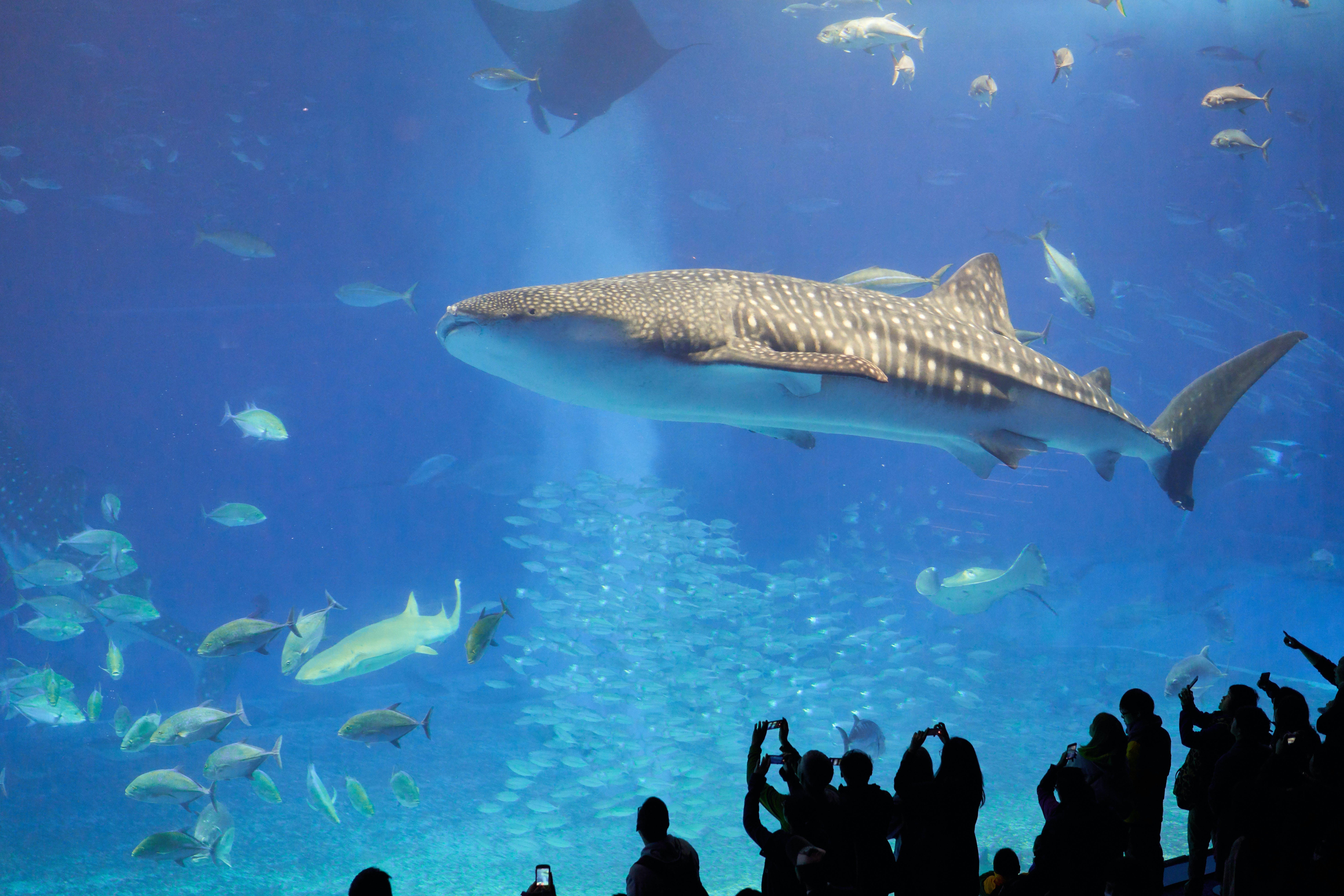 Free stock photo of animals, aquarium, aquatic, biology