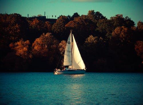 Free stock photo of boat, nature, ocean