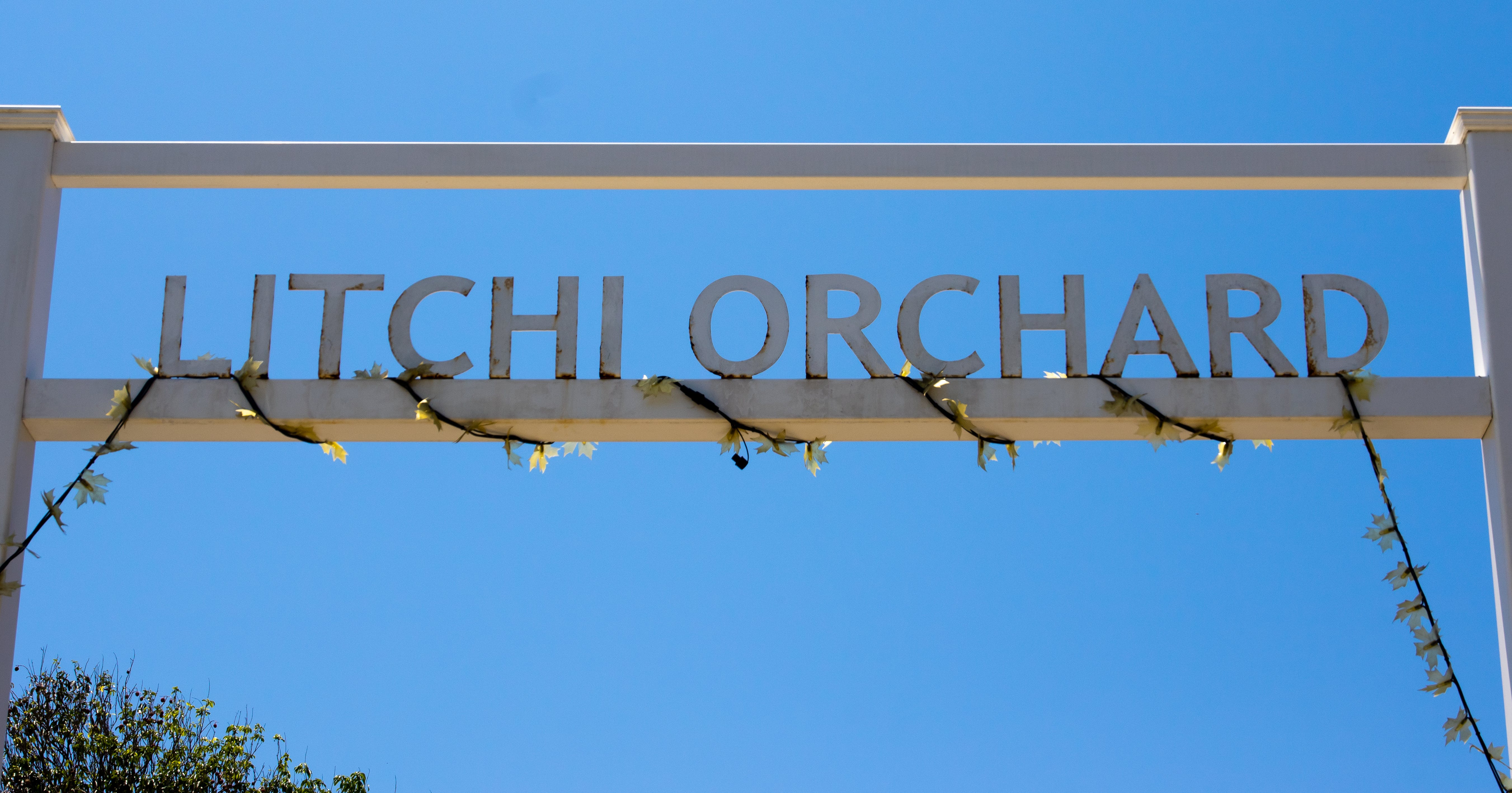 Free stock photo of letters, litchi orchard, orchard, places of interest