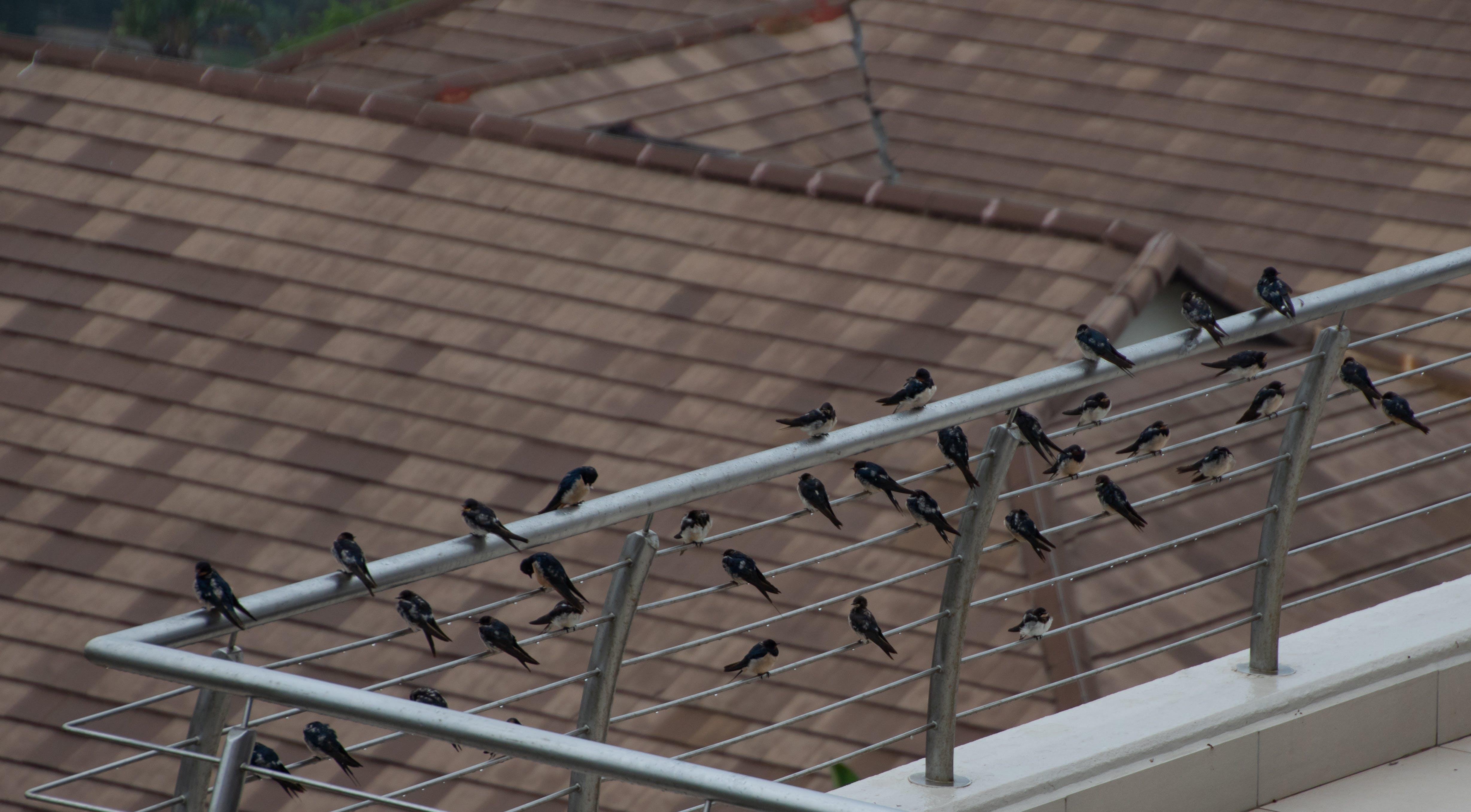 Free stock photo of animals, birds, migration, nature