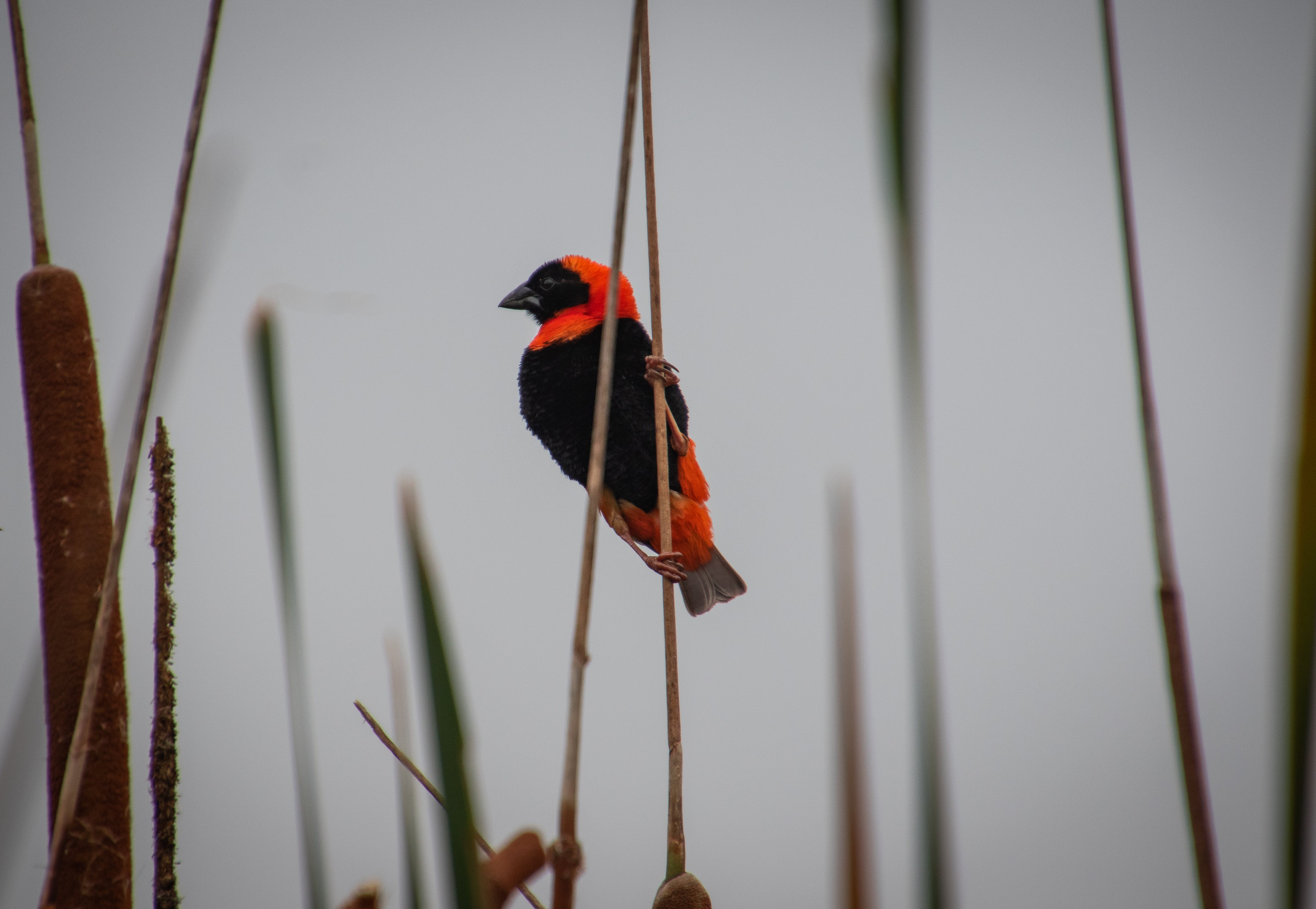 Free stock photo of animal, balance, bird, colourful