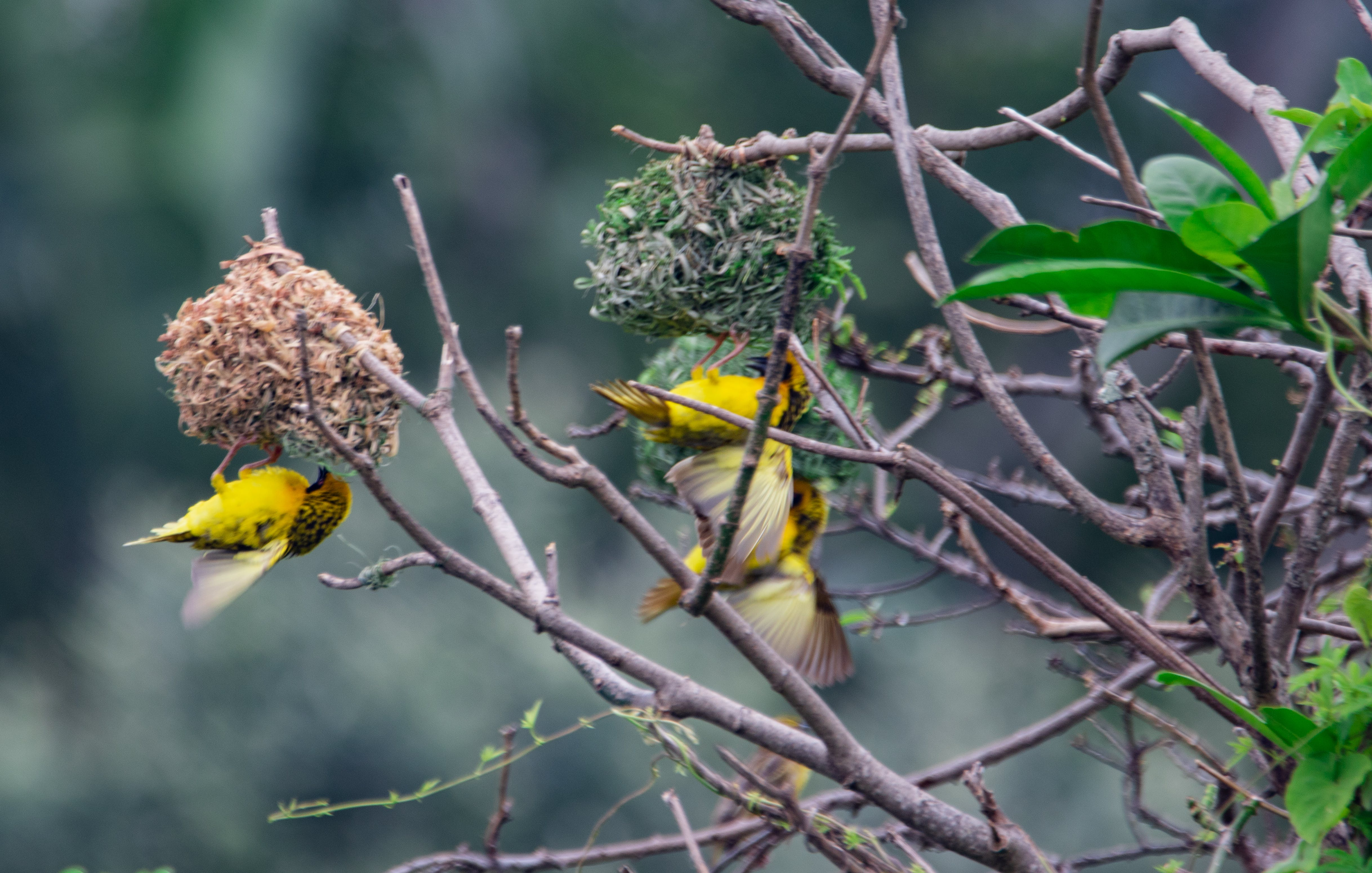 of animals, bird, birds, feathers