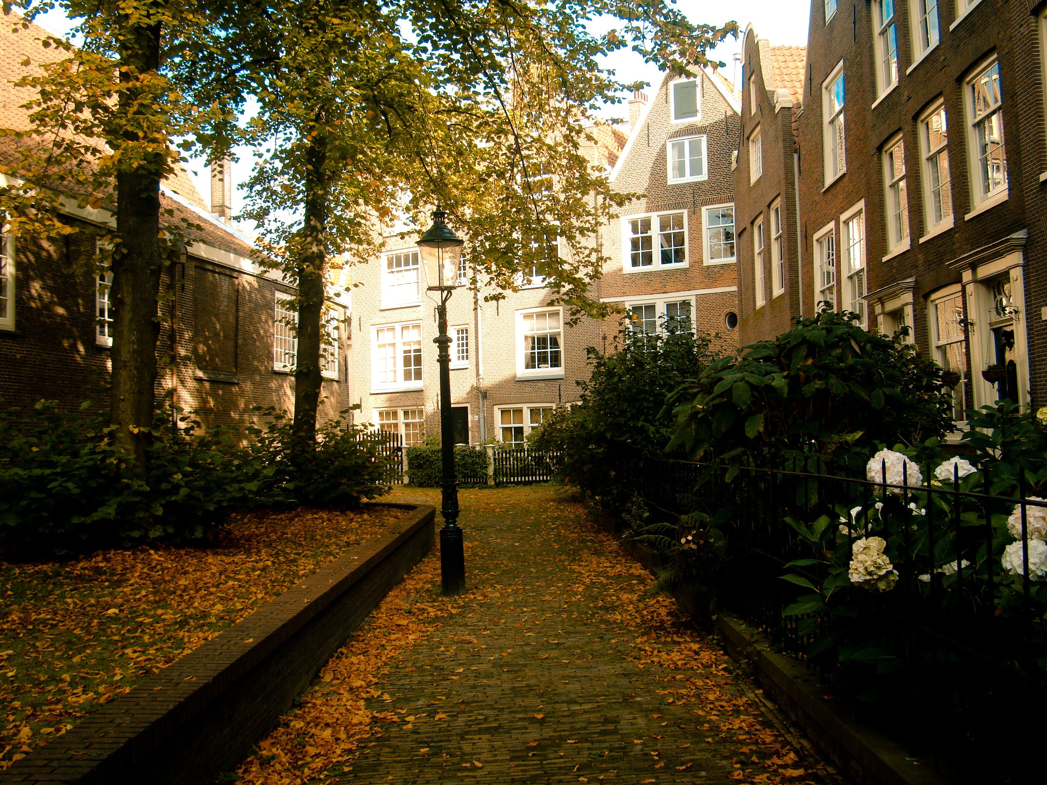amsterdam, nature