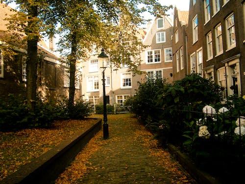 Free stock photo of amsterdam, nature