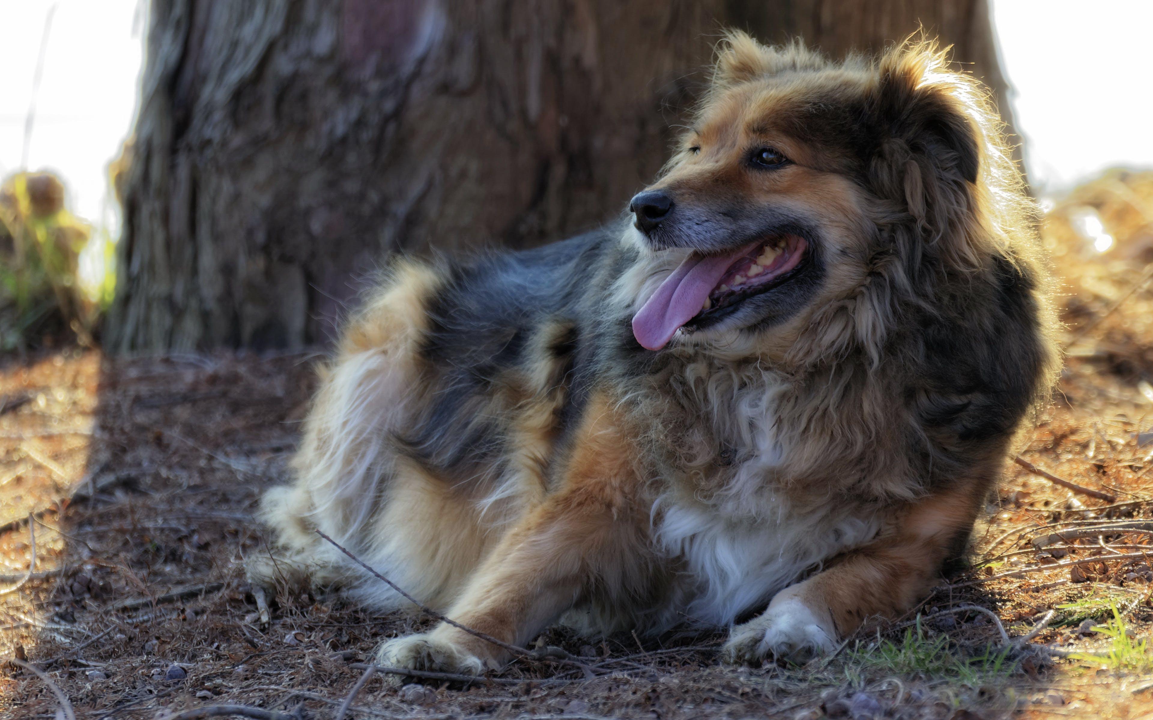 Free stock photo of dog near a tree, ground, long hair, park