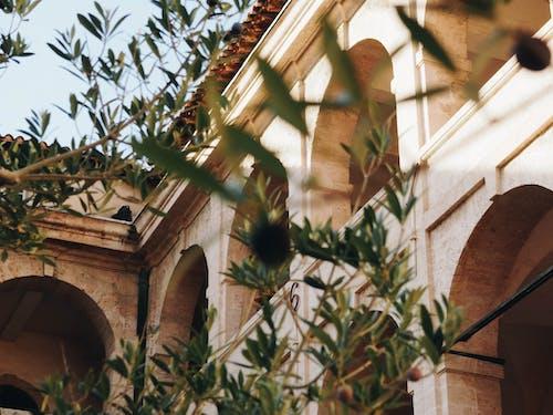 Foto d'estoc gratuïta de arbre, arcs, arquitectura, art