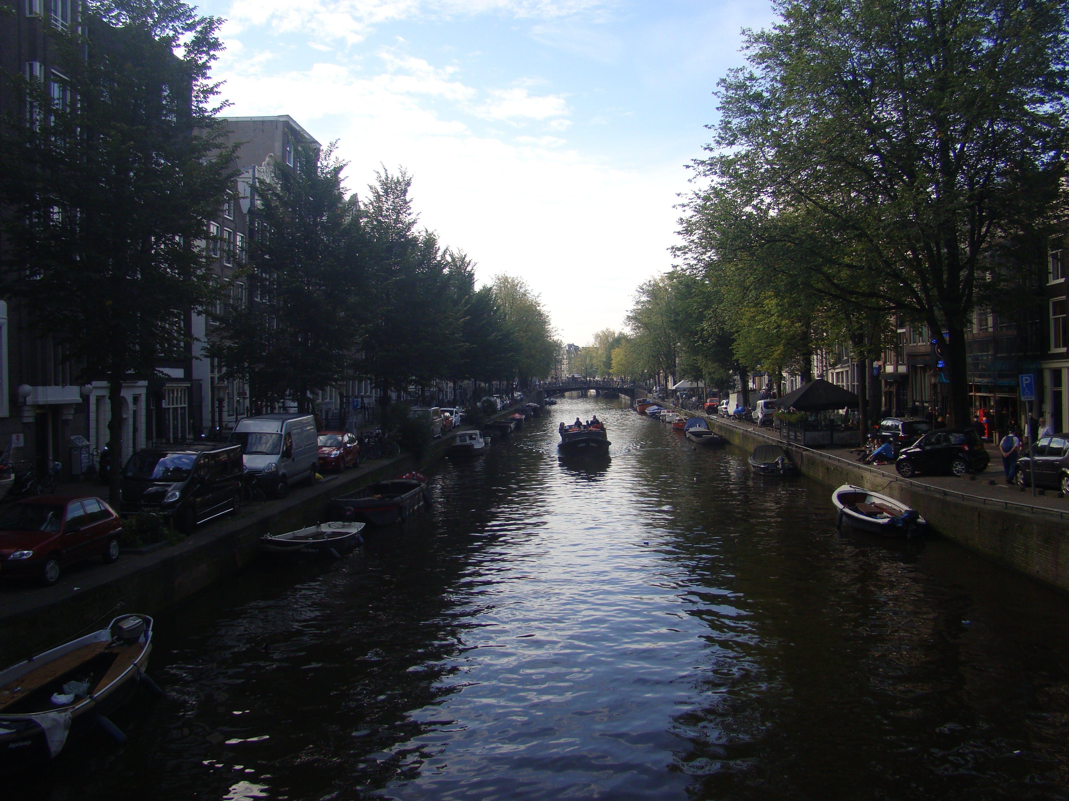 Free stock photo of nature, amsterdam