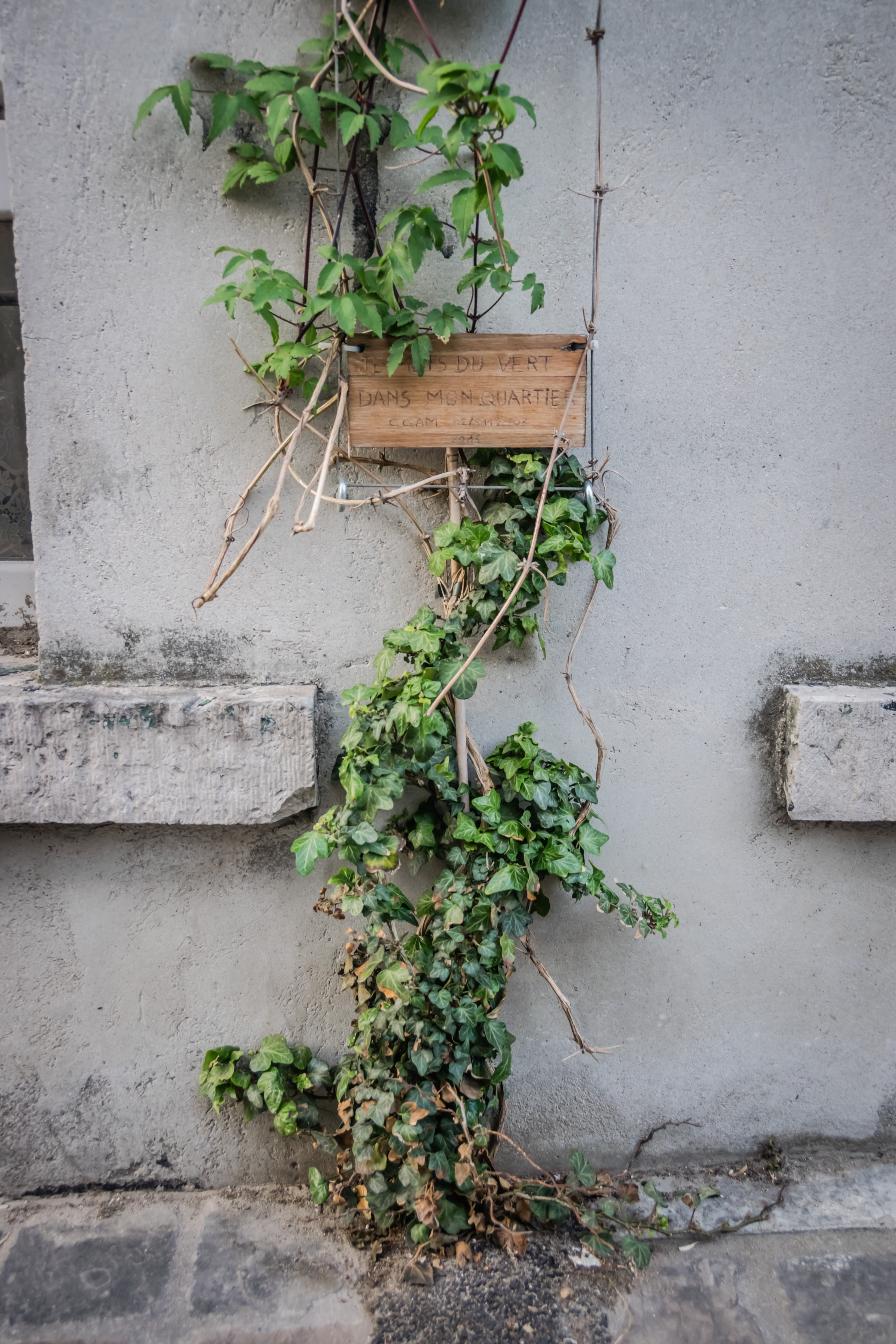 Green-leafed Plants on White Wall