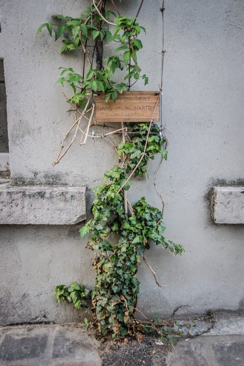 Ảnh lưu trữ miễn phí về ánh sáng ban ngày, cây thường xuân, cục đá, gỗ