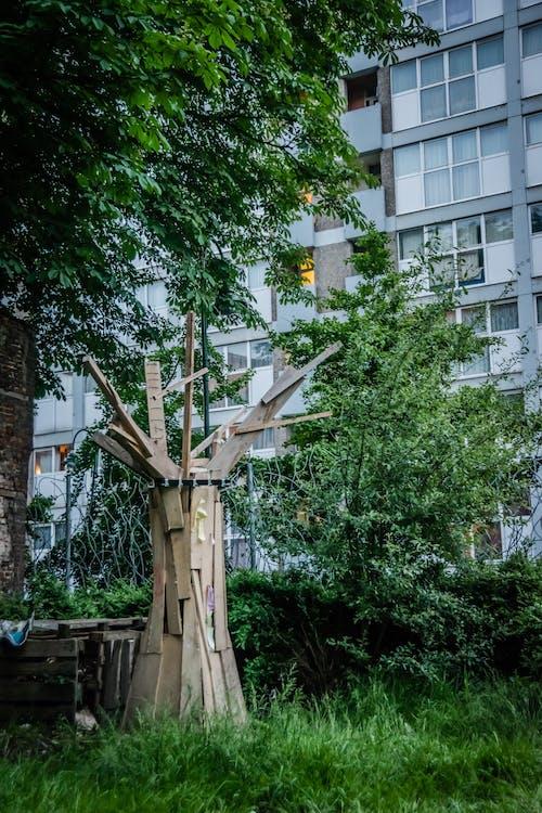 alberi, architettura, bicchiere