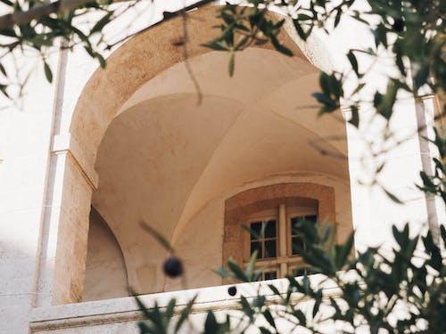 Foto d'estoc gratuïta de arbre, arc, arquitectònic, arquitectura