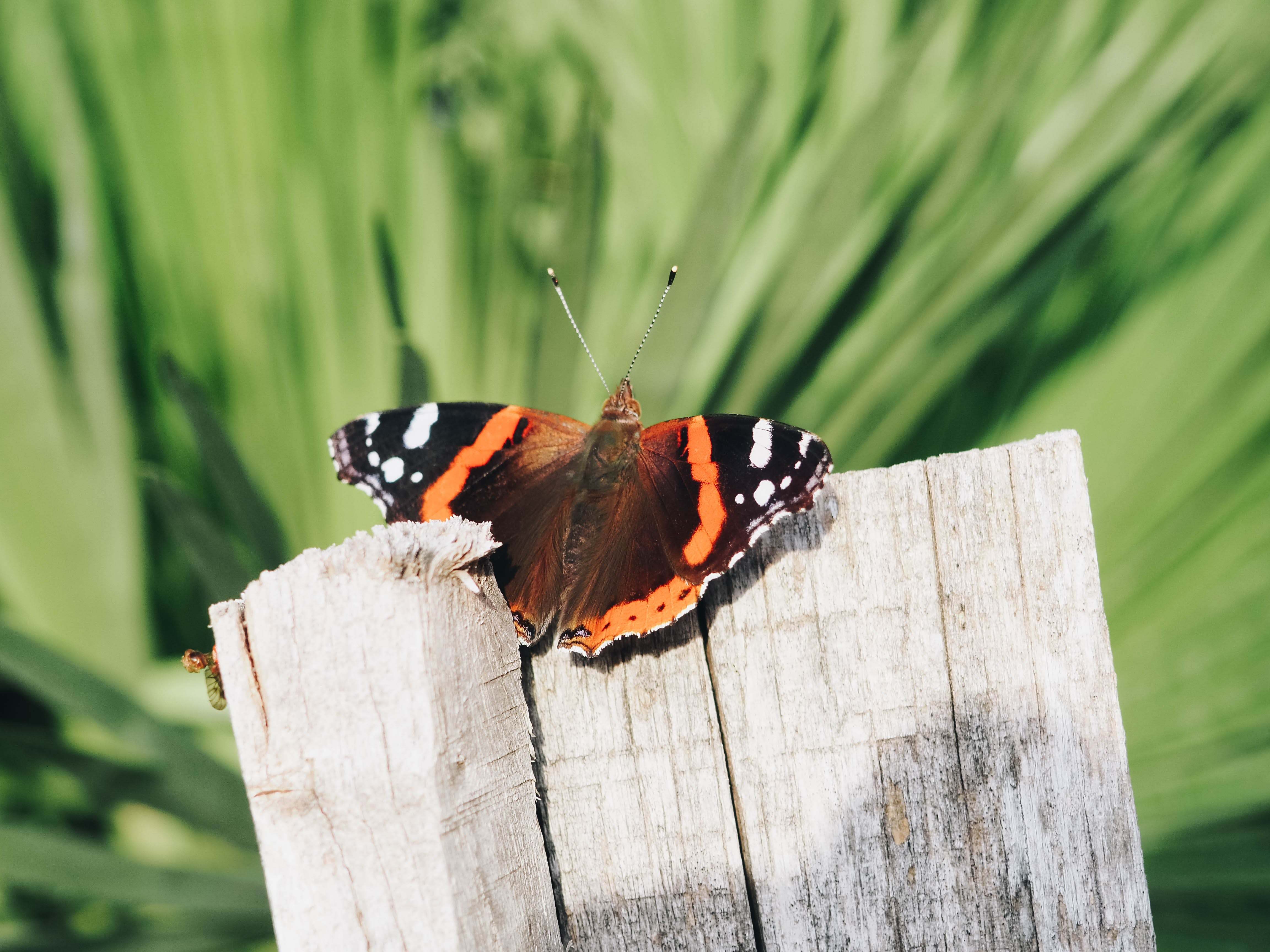 Free stock photo of animal, background, butterfly, fly