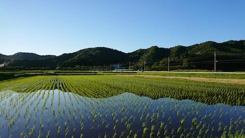 Free stock photo of japanese, village