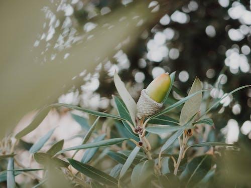 Foto d'estoc gratuïta de branca, femella, gla, macro
