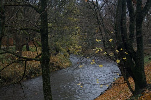 Free stock photo of park, trees
