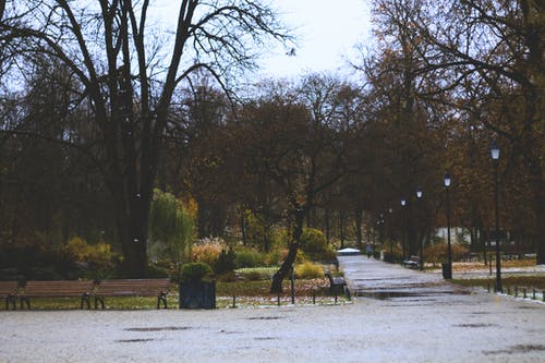 Free stock photo of park, park bench, path, road