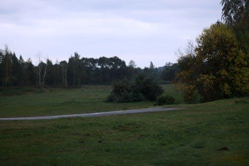 Free stock photo of clouds, field, nature, rain
