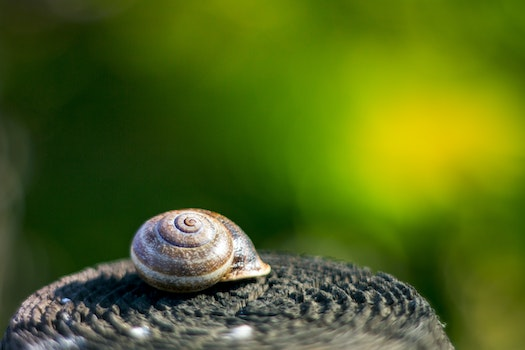 Free stock photo of snail, shell, slug, slow