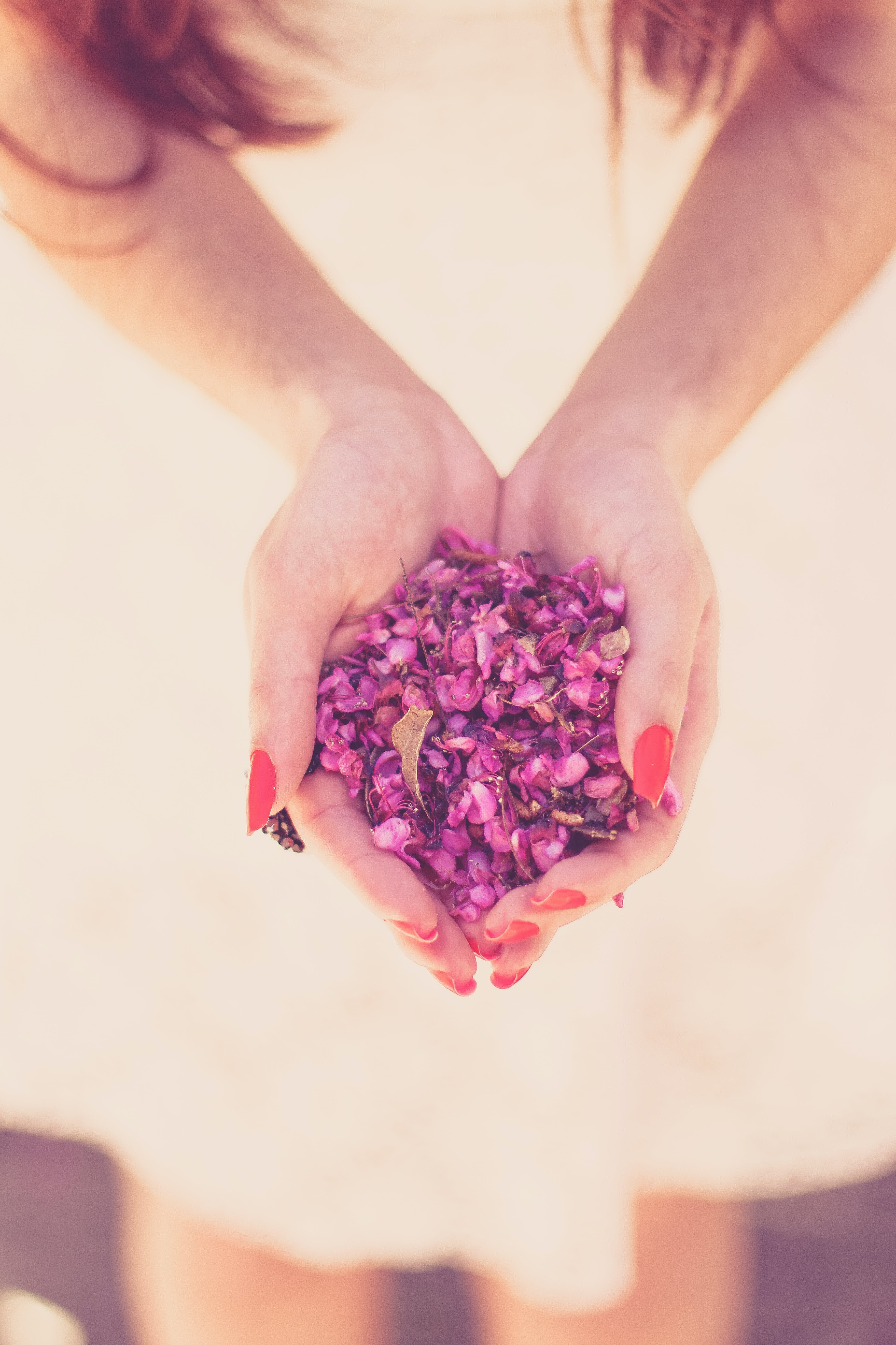 Close-up Photography of Person Holding Pink Petals