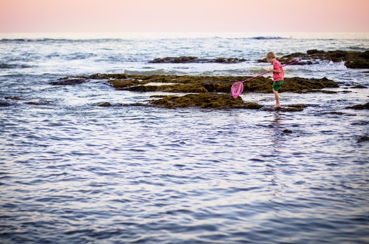 Free stock photo of fishing, sea, beach, playing