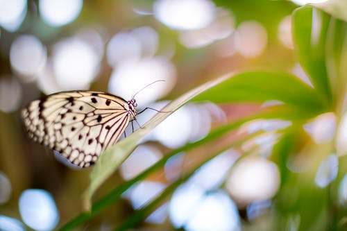 Shallow Focus Photography of Butterfly
