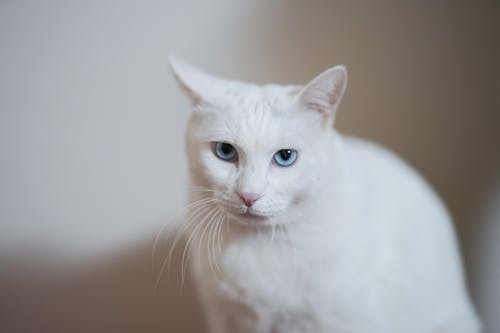Selective Focus Photo Of White Cat