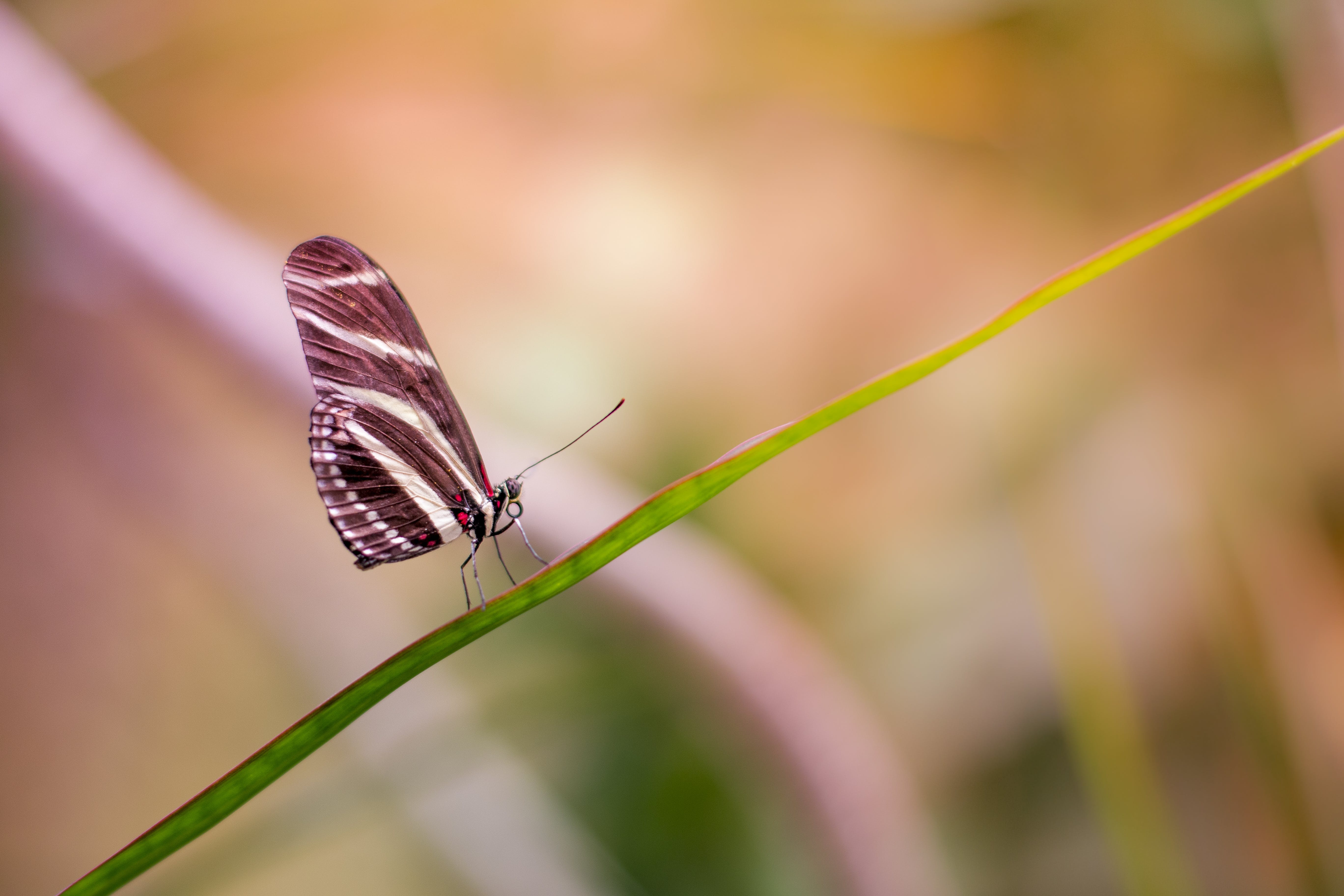 Free stock photo of animal, bokeh, insect, butterfly