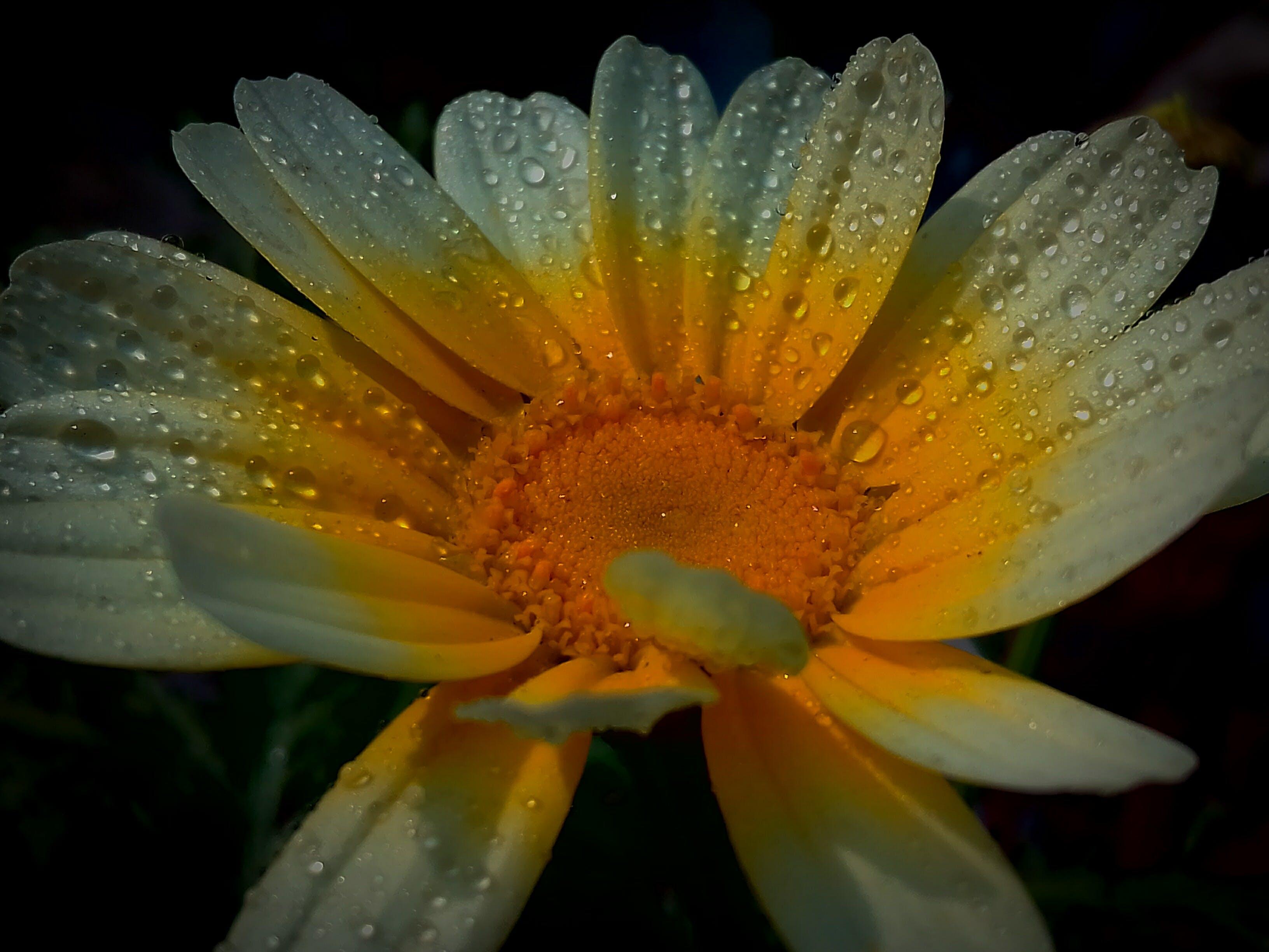 Gratis lagerfoto af 4k-baggrund, blomst, blomst tapet, blomsterflora