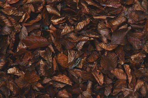 Foto stok gratis daun gugur, gersang, merapatkan, permukaan