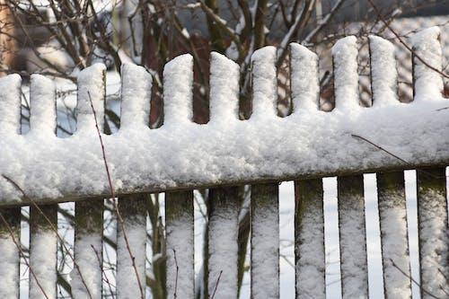 Free stock photo of drzewo, gałązka, mróz, płot