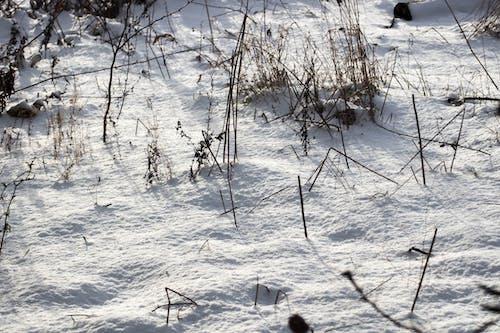 Free stock photo of mróz, snieg, śnieg na trawie, trawa