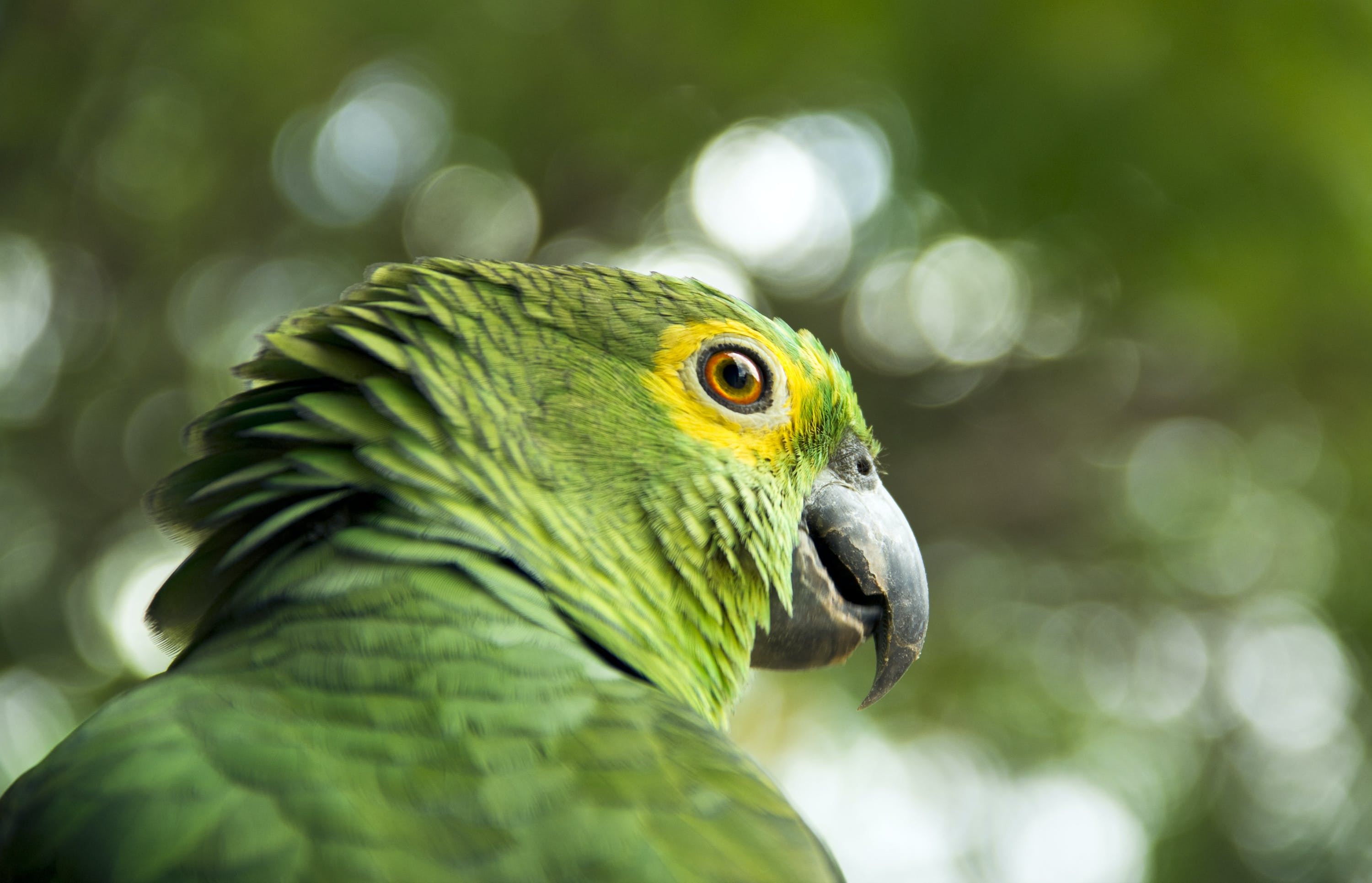 Selective Focus Photography Of Green Bird