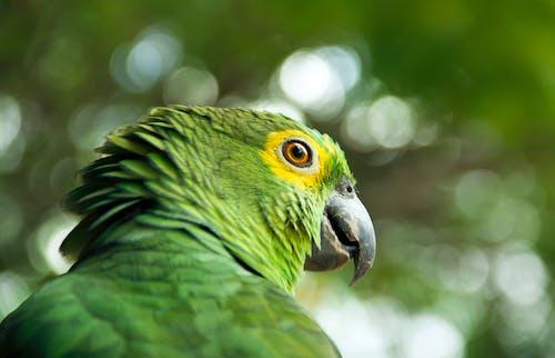 Kostnadsfri bild av djur, djurfotografi, fågel, fjäderdräkt